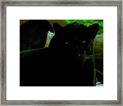 Framed Print featuring the photograph Panther by Chris Flees