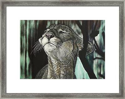 Panther, Cool Framed Print