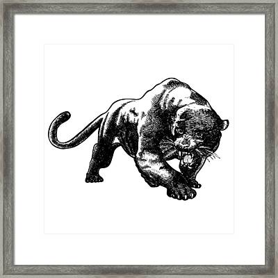 Panther Framed Print by Karl Addison