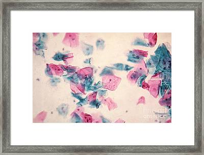 Pap Smear Framed Print