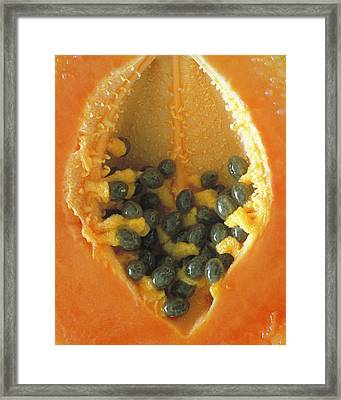 Framed Print featuring the photograph Papaya by Art Shimamura