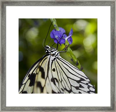 Paper Kite Butterfly Framed Print by Heather Applegate