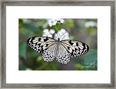 Paper Kite Framed Print