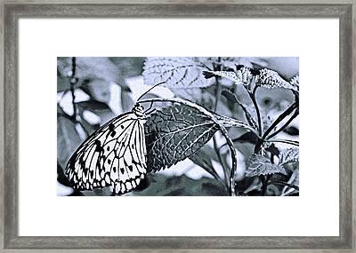 Paper Kite No. 7-1 Framed Print