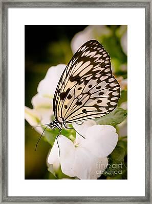 Paper Kite On White Framed Print