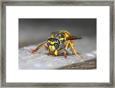 Paper Maker Framed Print