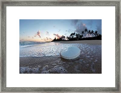 Paper Nautilus Bubbles Framed Print
