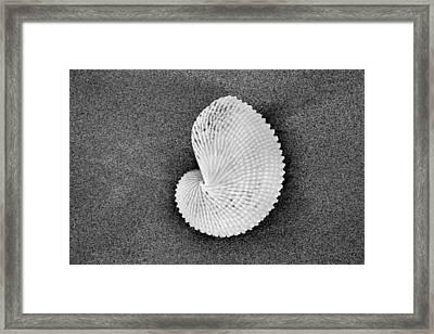 Paper Nautilus Shell Framed Print