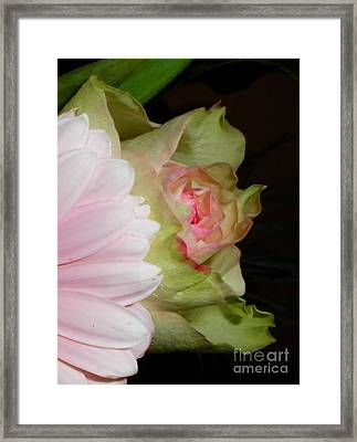 Paper Pinks Framed Print by Sian Lindemann