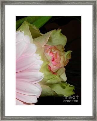 Paper Pinks Framed Print
