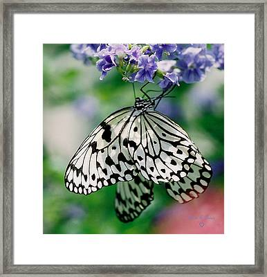 Framed Print featuring the photograph Paper Rice Butterfly by Donna Brown