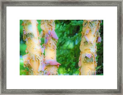 Paper Thin Bark Framed Print