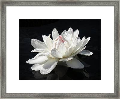 Paper White Framed Print by Rosalie Scanlon