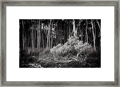 Paperbark Framed Print