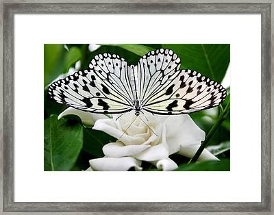 Paperkite On Gardenia Framed Print