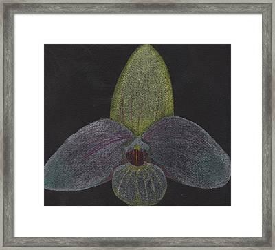 Paphiopedilum Mem. Orchid Framed Print