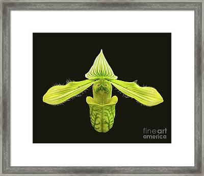 Framed Print featuring the photograph Paphiopedilum Venustum Closeup by Susan Wiedmann