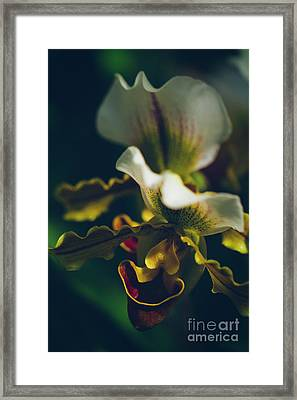 Framed Print featuring the photograph Paphiopedilum Villosum Orchid Lady Slipper by Sharon Mau