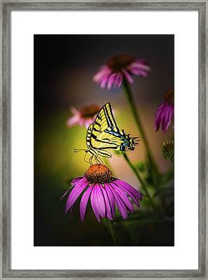 Papilio Framed Print by Jeffrey Jensen
