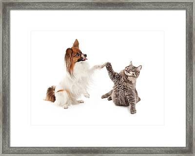 Papillon Dog And Cat High Five Framed Print