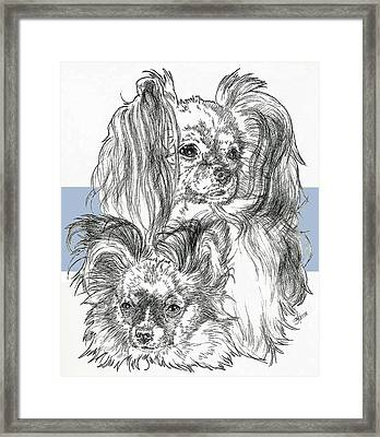Papillon Father And Son Framed Print by Barbara Keith
