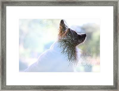 Papillon Pine Landscape Framed Print