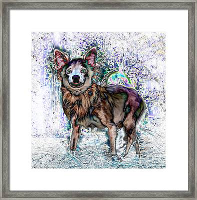 Papillon Framed Print by Warren Sarle