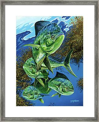 Papito Framed Print by Dennis Friel
