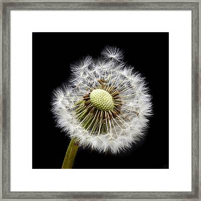Parachute Seeds Framed Print by Terence Davis