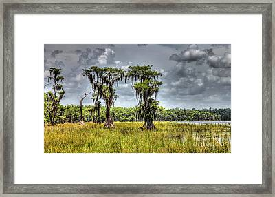 Parade Of Cypress Trees Framed Print by Felix Lai