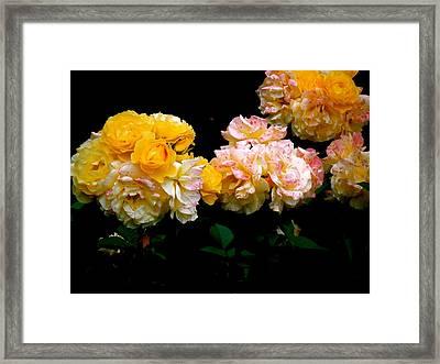 Parade Of Roses  Framed Print