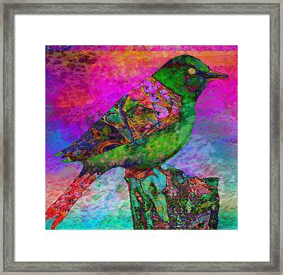Paradise 1 Framed Print by Robin Mead