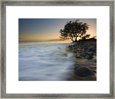 Paradise Gold Framed Print by Mike  Dawson