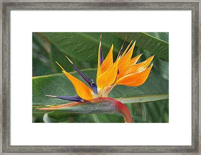 Paradise II Painting Framed Print by Don  Wright