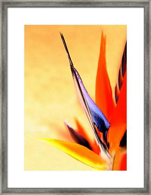 Paradise Lost Framed Print by Marion Cullen