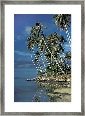 Paradise Framed Print by Marc Bittan
