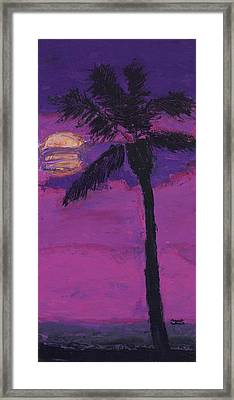 Paradise Palm Framed Print by Maggie  Morrison