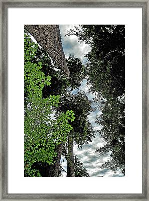 Paradise To Lovers Of Big Trees - Olympic National Park Wa Framed Print by Christine Till
