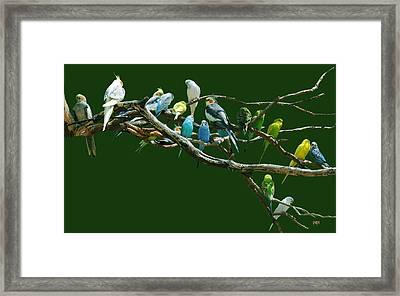 Parakeets N Cockatiels Framed Print