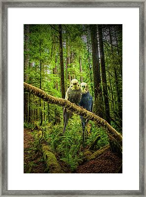 Parakeets Perched On A Branch Framed Print by Randall Nyhof