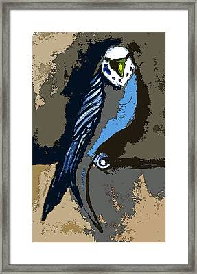 Paraket Blue Framed Print by Mindy Newman