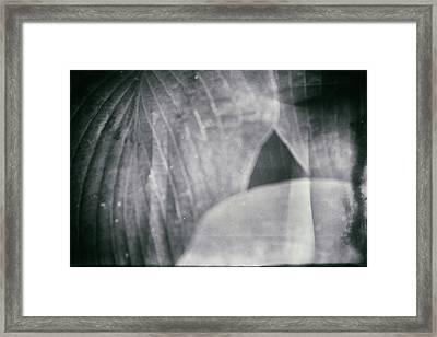 Parallel Botany #5155 Framed Print by Andrey Godyaykin