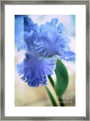 Parallel Botany #5254 Framed Print by Andrey Godyaykin