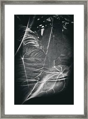 Parallel Botany #5266 Framed Print by Andrey Godyaykin