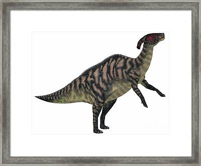 Parasaurolophus Striped On White Framed Print by Corey Ford