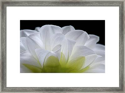 Pardon My Backside Framed Print by Carolyn Dalessandro