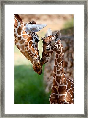 Parent-child Relationship Framed Print by Yuri Peress