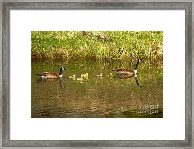 Parental Swimming Lessons Framed Print by Adam Jewell