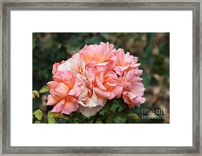 Paris Garden Roses Framed Print