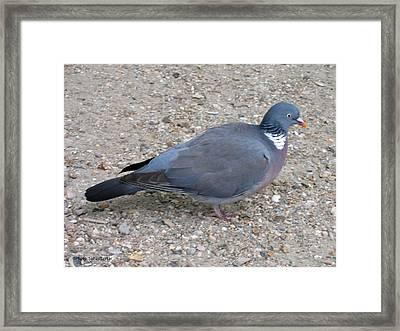 Paris Pigeon Framed Print by Suhas Tavkar